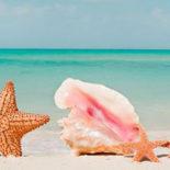 Эрекция на пляже